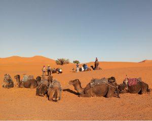 excursion désert Merzouga depuis Marrakech