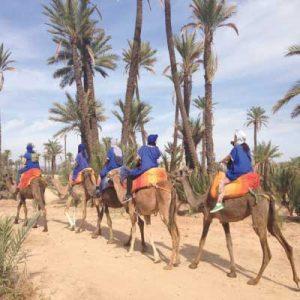 balade dromadaire marrakech