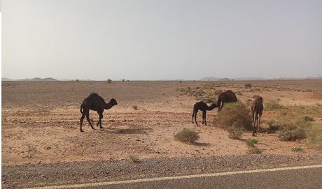 Circuit 2 jours désert de Merzouga au départ de Fès