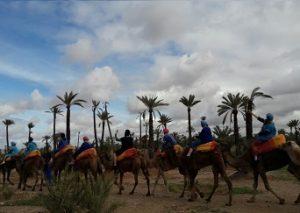balade dromadaire coucher de soleil la palmeraie marrakech